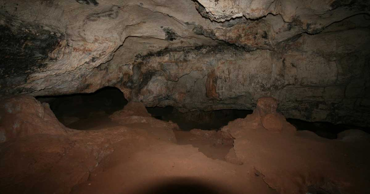 La cova del bolet